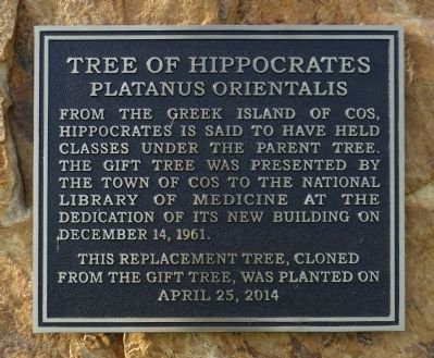 Tree of Hippocrates Marker image. Click for full size.