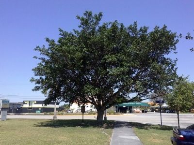 Marker under tree at U.S. 1 (S. Dixie Highway) image. Click for full size.