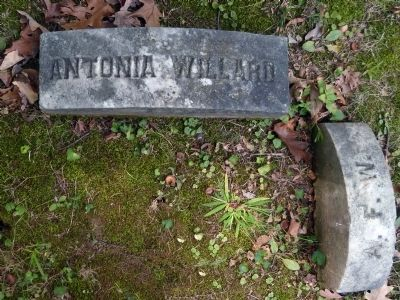 Grave of Antonia Ford Willard<br>Oak Hill Cemetery image. Click for full size.
