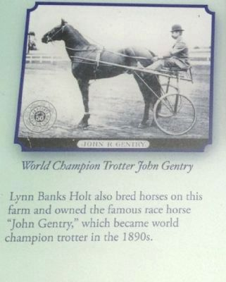 World Champion Trotter John Gentry image. Click for full size.