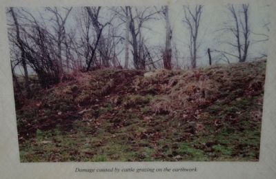 Damage caused by cattle grazing on the earthwork image. Click for full size.