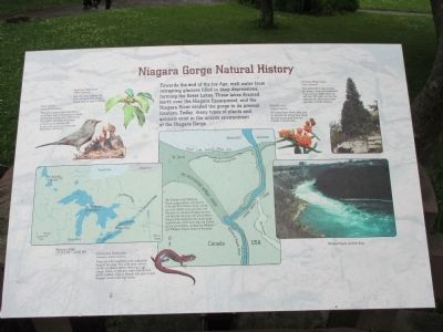 Niagara Gorge Natural History Marker image. Click for full size.