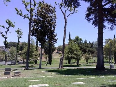Cemetery with Catalpa Trees image. Click for full size.