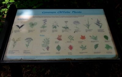 Common Cliffside Plants Wayside Exhibit image. Click for full size.