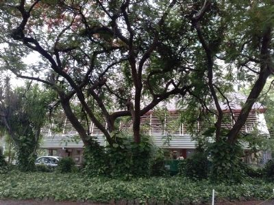 Coconut Grove Library, view from S. Bayside Drive image. Click for full size.