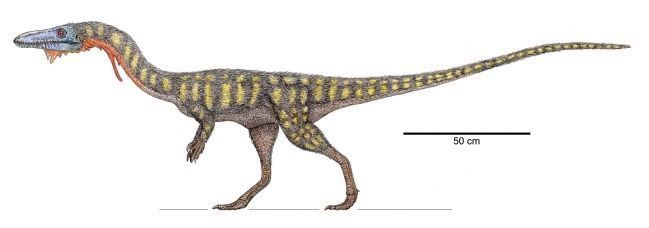 Artist Conception of <i>Coelophysis bauri</i> image. Click for full size.