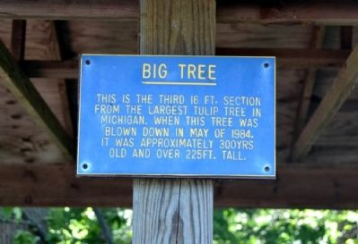 Big Tree Marker image. Click for full size.