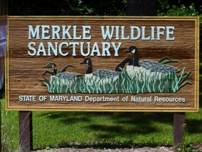 Merkle Wildlife Refuge image. Click for full size.