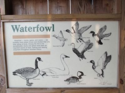 Waterfowl information image. Click for full size.