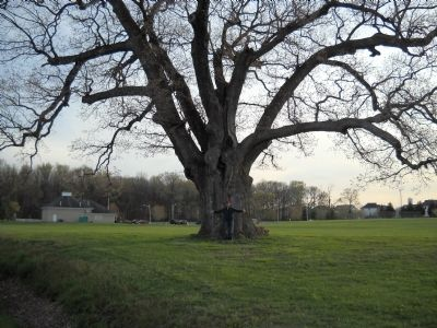 The Keeler Oak Tree Marker image. Click for full size.