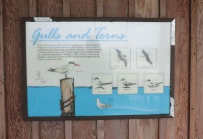 Gulls and Terns Marker image. Click for full size.