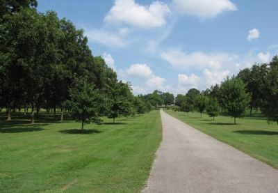 Cotton Hill driveway image. Click for full size.