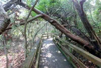 Hoop Pole Creek: A Coastal Nature Preserve Walkway image. Click for full size.