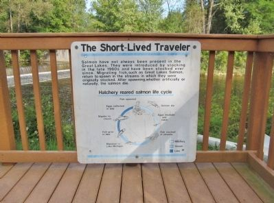 The Short-Lived Traveler image. Click for full size.