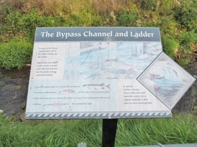 The Bypass Channel and Ladder image. Click for full size.