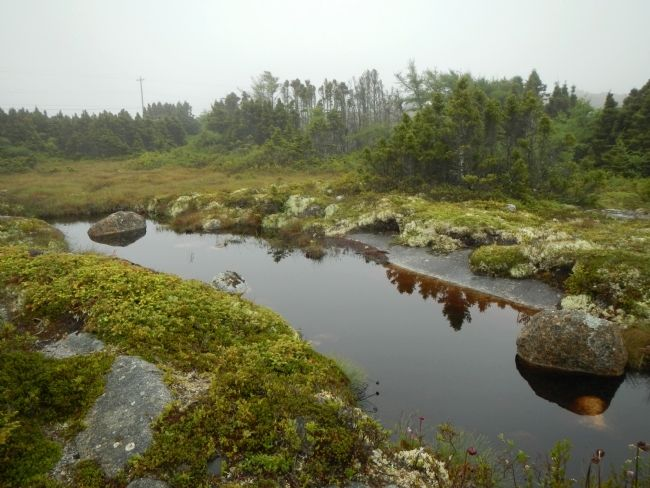 Bog and barrens at Peggy's Cove image. Click for full size.