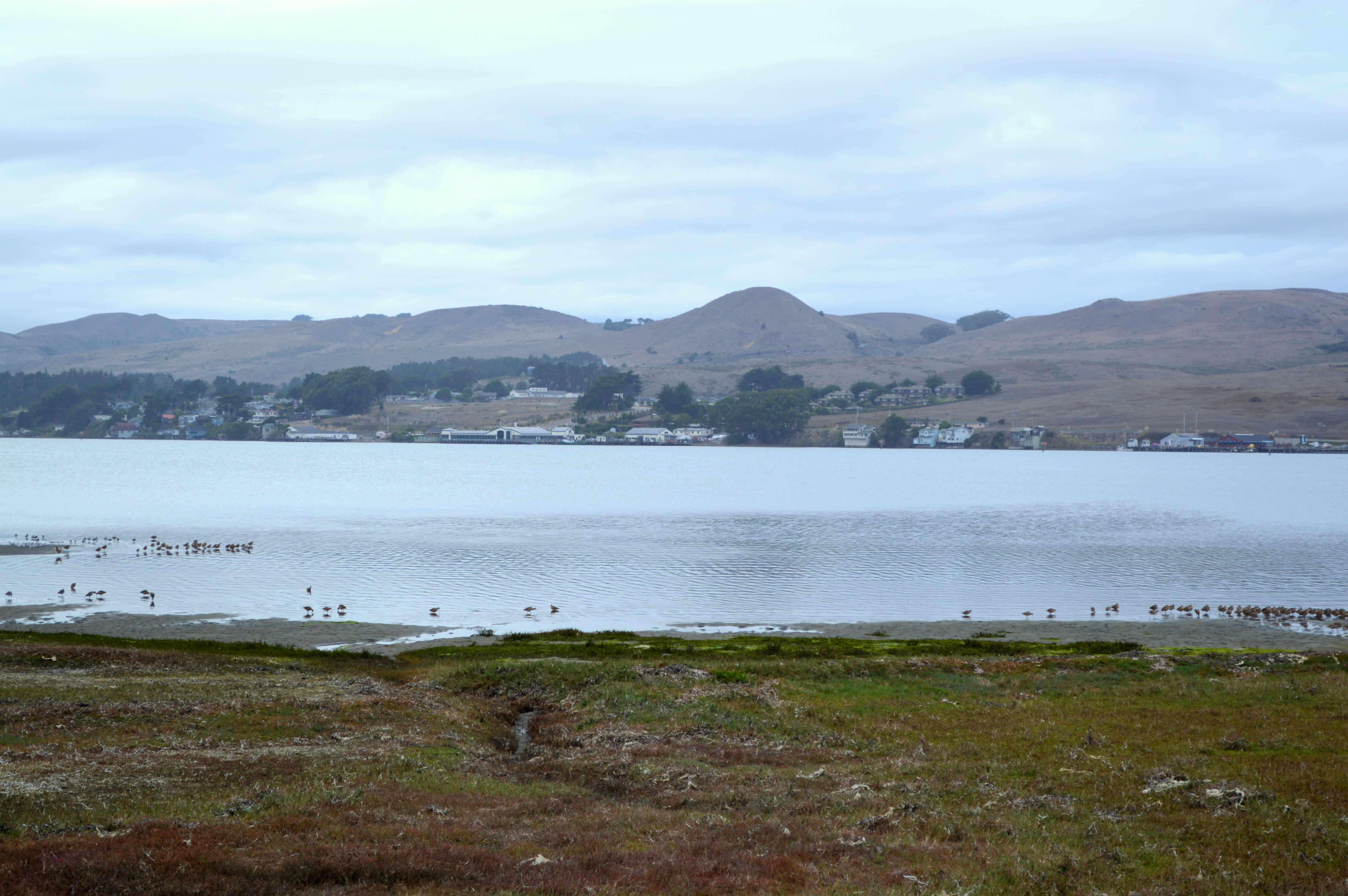 The Town of Bodega Bay and Harbor