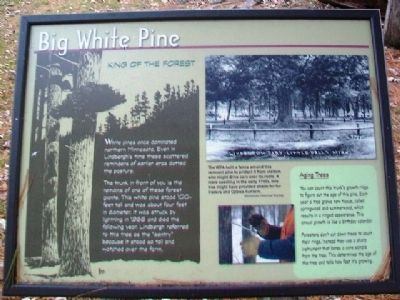 Big White Pine Marker image. Click for full size.