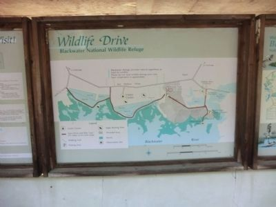 Blackwater National Wildlife Refuge-Wildlife Drive Map image. Click for full size.
