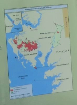 Close up of the map on the Blackwater National Wildlife Refuge Marker image. Click for full size.