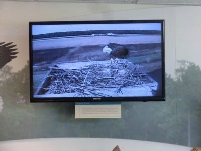 Monitor inside the Visitor Center of a Eagle's Nest located outside image. Click for full size.