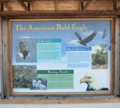 The American Bald Eagle Marker image. Click for full size.