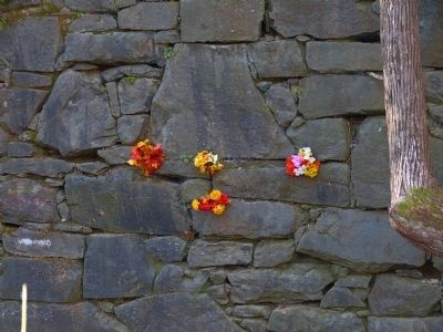 Flowers in the Dam Wall image. Click for full size.
