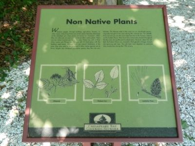 Non Native Plants Marker image. Click for full size.