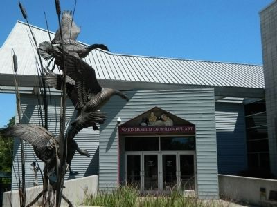Ward Museum of Waterfowl Art image. Click for full size.