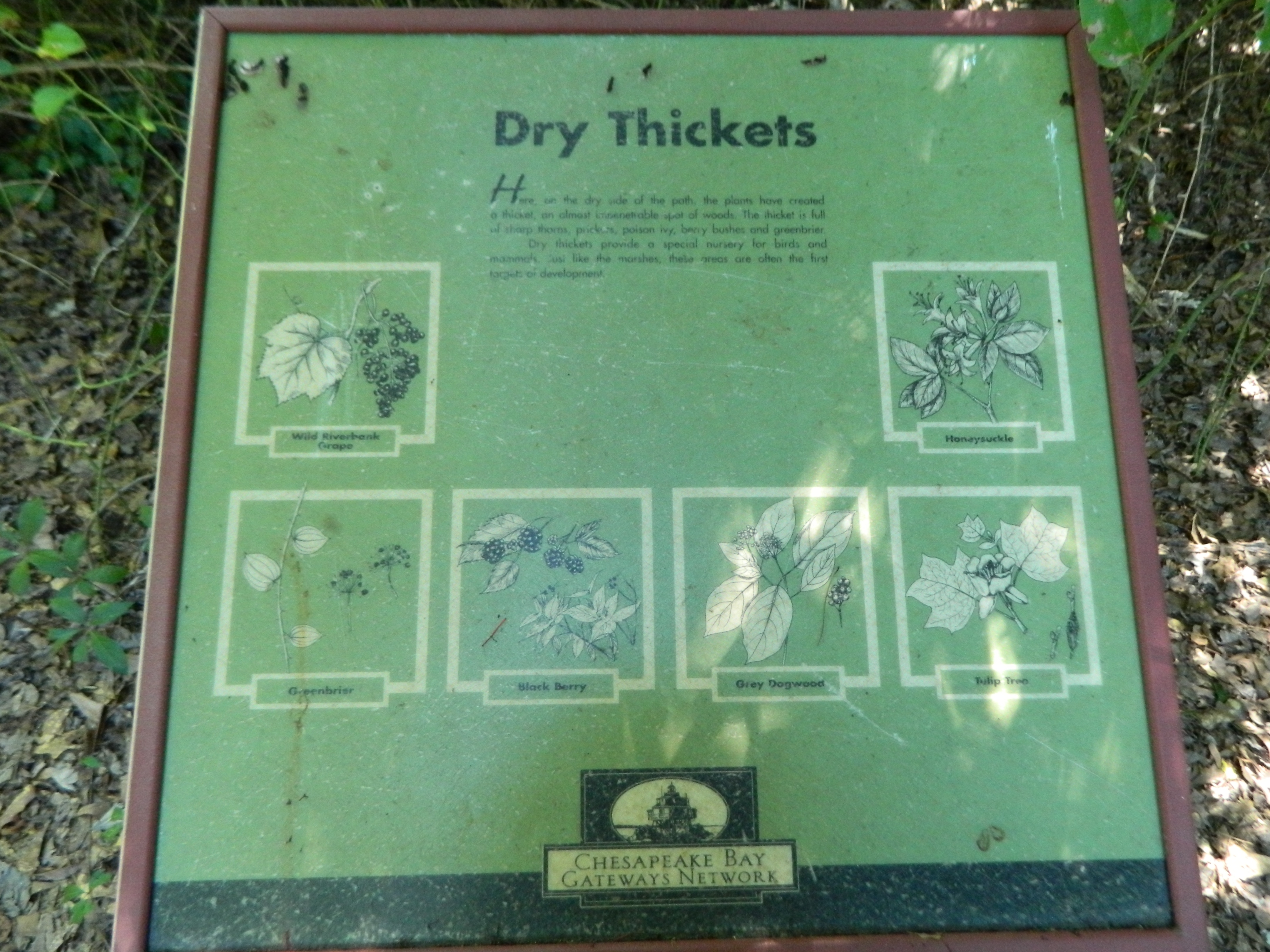 Dry Thickets Marker