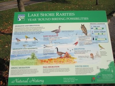 Lake Shore Rarities Marker image. Click for full size.