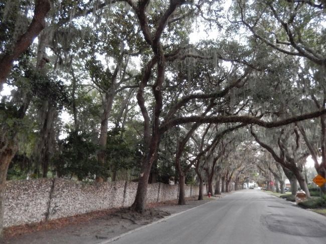 Tabby Concrete Fence & Live Oak Trees image. Click for full size.