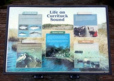 Life on Currituck Sound Marker image. Click for full size.