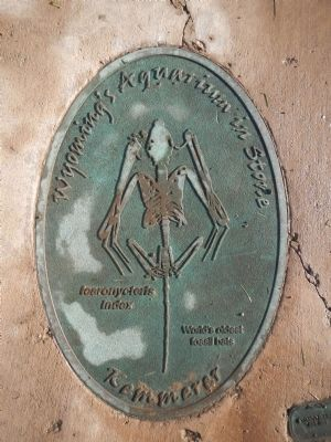 Wyoming's Aquarium in Stone plaque image. Click for full size.