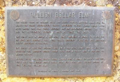 """Million Dollar Elm"" Marker image. Click for full size."