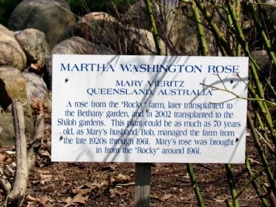 Informational Sign on Martha Washington Rose image. Click for full size.
