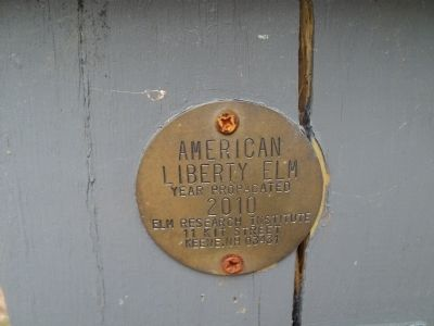 American Liberty Elm Plaque image. Click for full size.