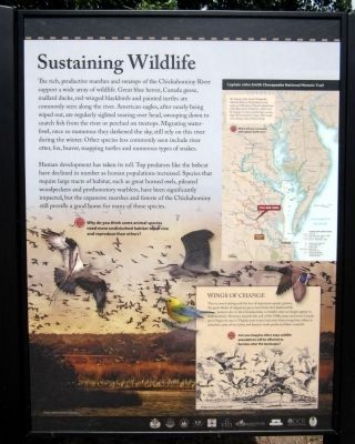 Sustaining Wildlife (right panel) image. Click for full size.
