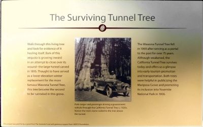 The Surviving Tunnel Tree Marker image. Click for full size.