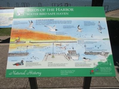 Birds of the Harbor Marker image. Click for full size.