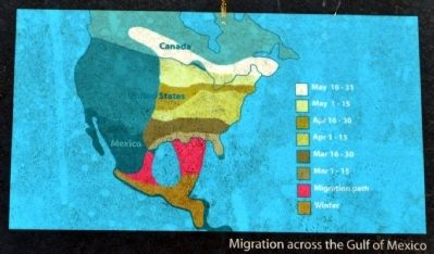 Spring Migration of the Ruby-Throated Hummingbird image. Click for full size.