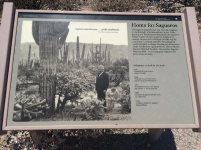 Home for Saguaros Marker image. Click for full size.