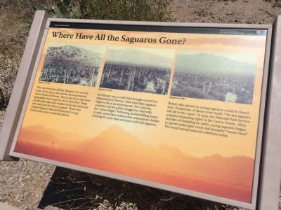 Where Have All the Saguaros Gone? Marker image. Click for full size.