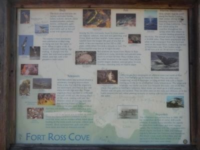 Marine life panel at the Fort Ross Cove kiosk image. Click for full size.
