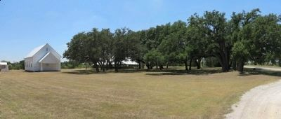 Live Oak Grove image. Click for full size.