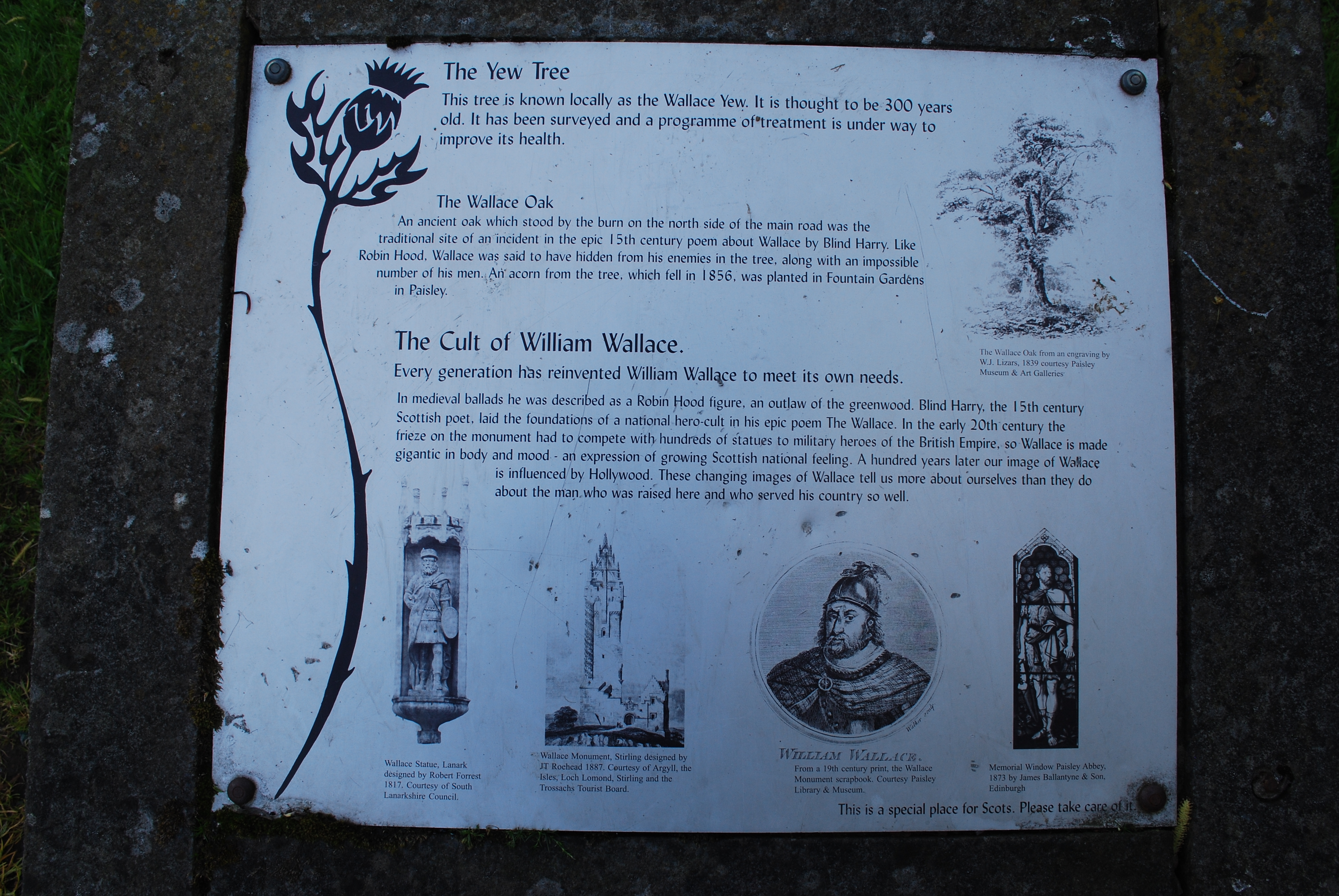 Yew Tree, Oak, and Cult Marker Marker
