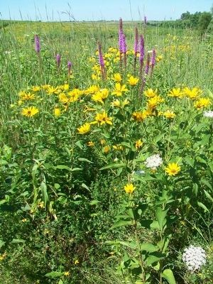 Native Prairie at Henry A. Wallace Country Life Center image. Click for full size.