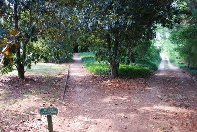 Trail Leading to the Graveyard image. Click for full size.