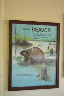 Meet the Beaver Marker image, Touch for more information