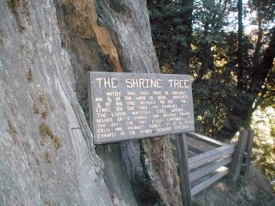 The Shrine Tree Marker image. Click for full size.